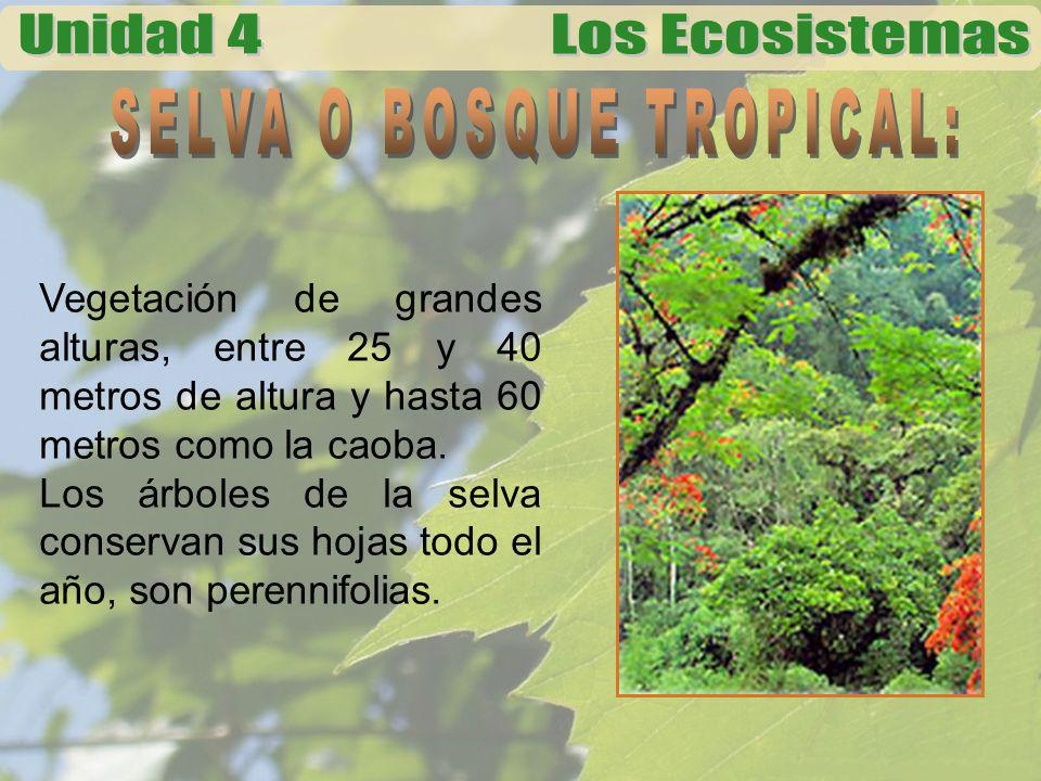 SELVA O BOSQUE TROPICAL:
