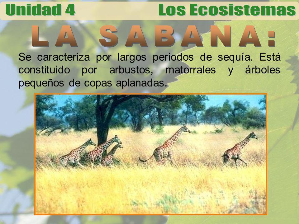 LA SABANA: Se caracteriza por largos periodos de sequía.