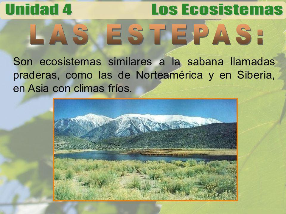 LAS ESTEPAS: Son ecosistemas similares a la sabana llamadas praderas, como las de Norteamérica y en Siberia, en Asia con climas fríos.
