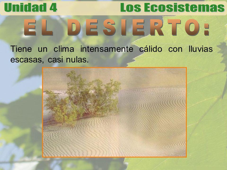 EL DESIERTO: Tiene un clima intensamente cálido con lluvias escasas, casi nulas.