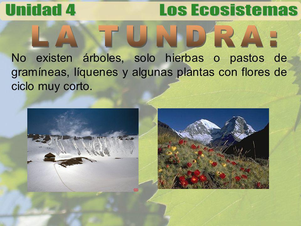 LA TUNDRA: No existen árboles, solo hierbas o pastos de gramíneas, líquenes y algunas plantas con flores de ciclo muy corto.
