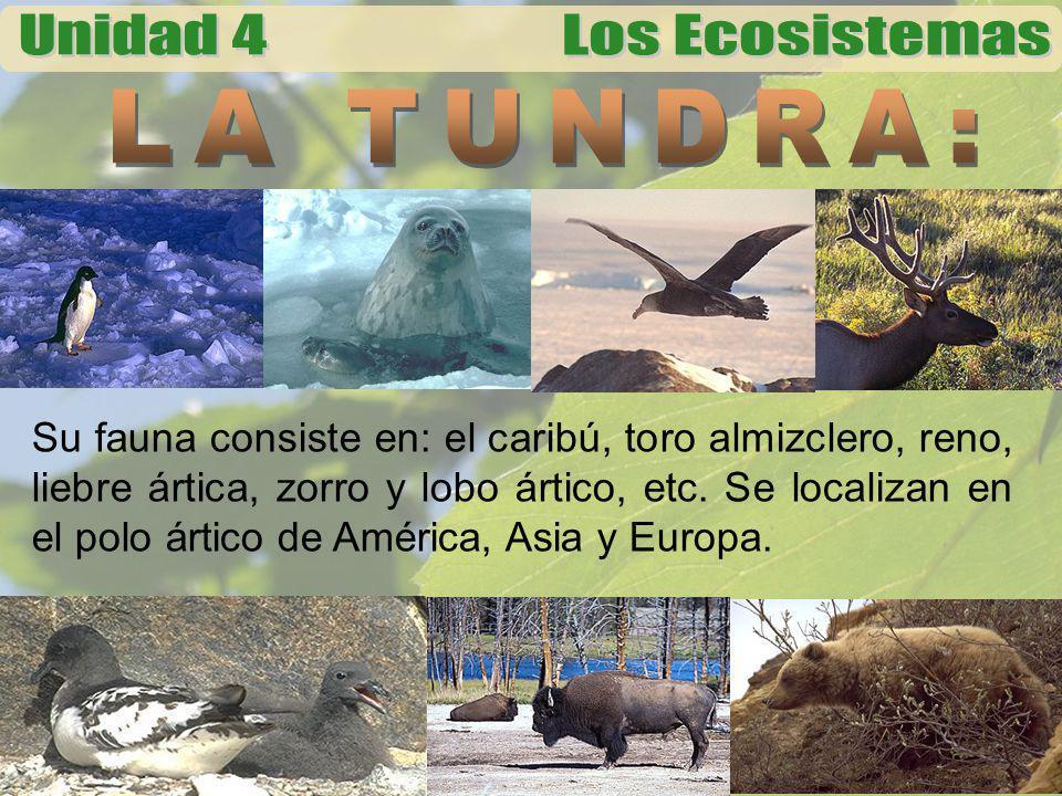 LA TUNDRA:
