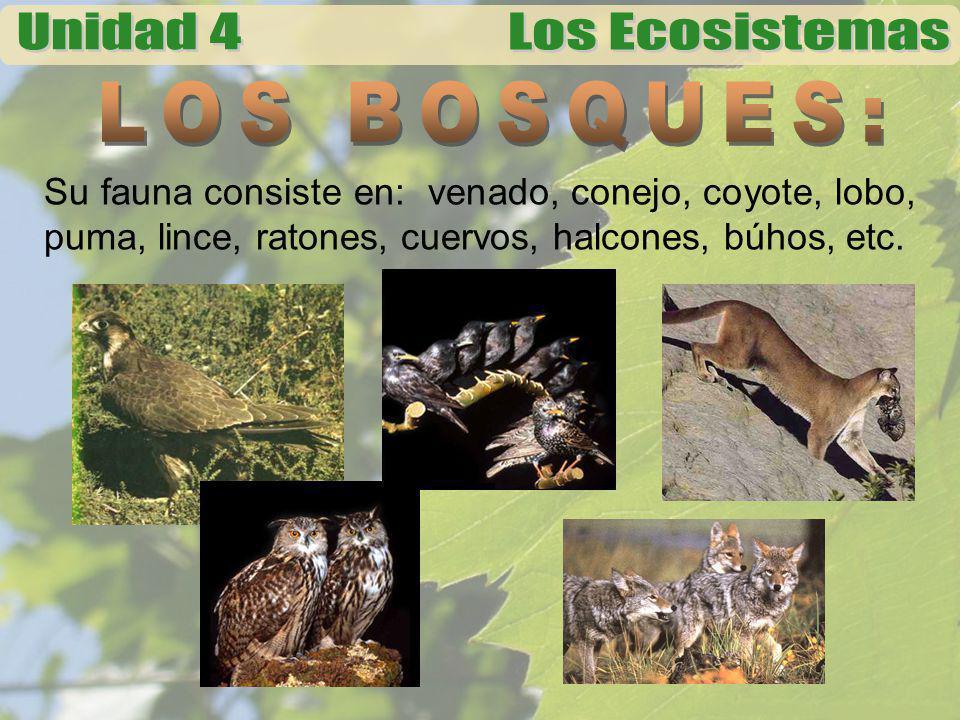 LOS BOSQUES: Su fauna consiste en: venado, conejo, coyote, lobo, puma, lince, ratones, cuervos, halcones, búhos, etc.