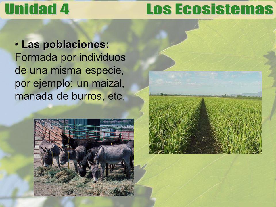 Las poblaciones: Formada por individuos de una misma especie, por ejemplo: un maizal, manada de burros, etc.