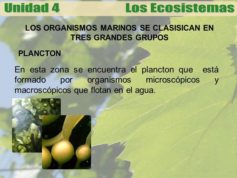 LOS ORGANISMOS MARINOS SE CLASISICAN EN TRES GRANDES GRUPOS