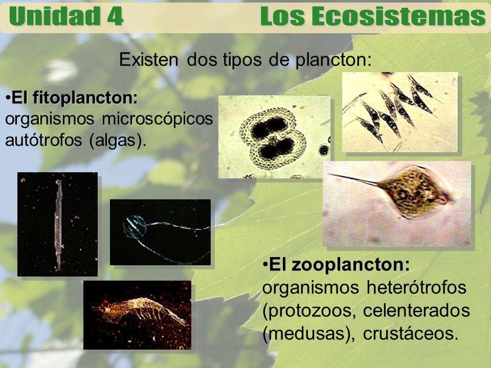 Existen dos tipos de plancton:
