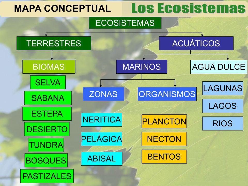 MAPA CONCEPTUAL ECOSISTEMAS TERRESTRES ACUÁTICOS BIOMAS MARINOS