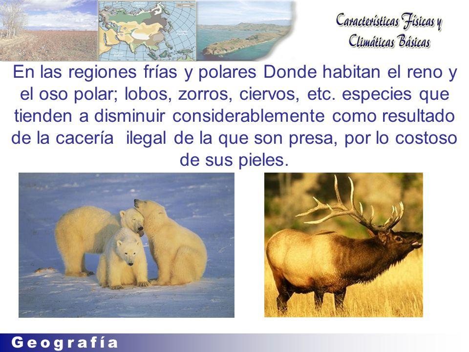 En las regiones frías y polares Donde habitan el reno y el oso polar; lobos, zorros, ciervos, etc.