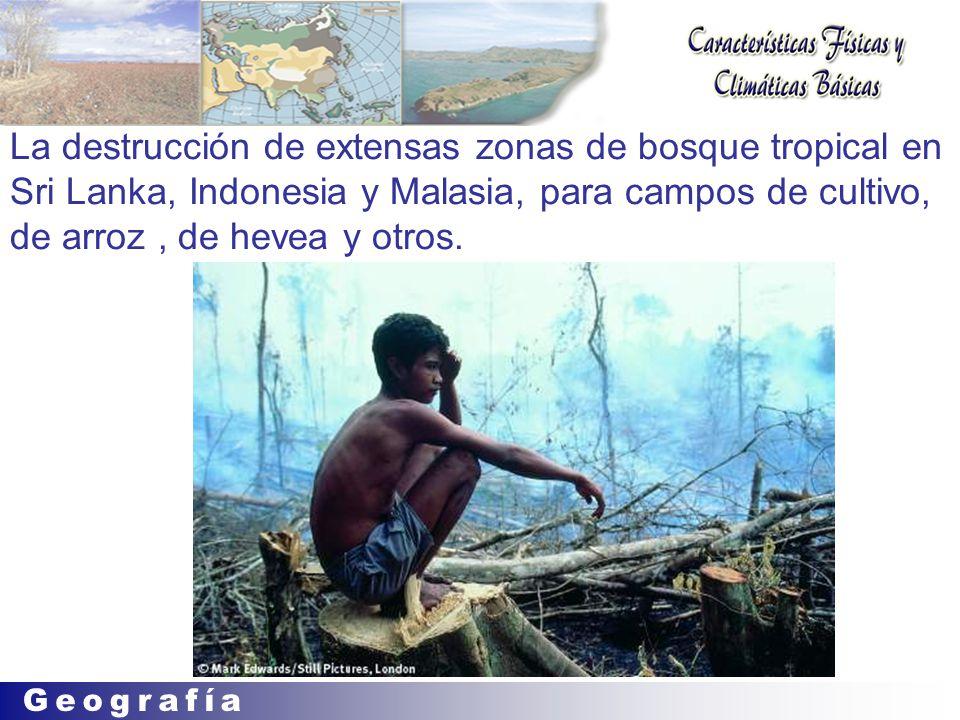 La destrucción de extensas zonas de bosque tropical en Sri Lanka, Indonesia y Malasia, para campos de cultivo, de arroz , de hevea y otros.