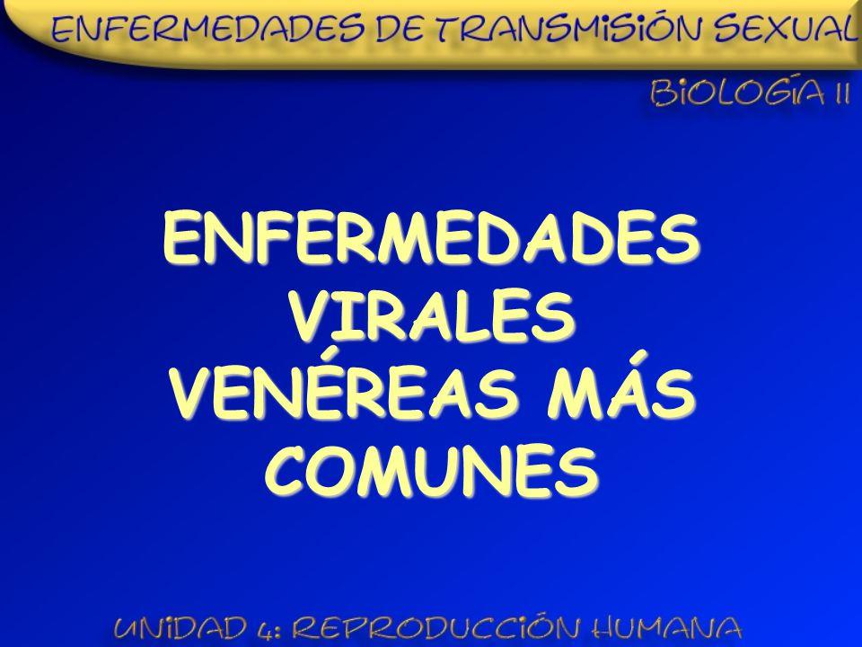 ENFERMEDADES VIRALES VENÉREAS MÁS COMUNES