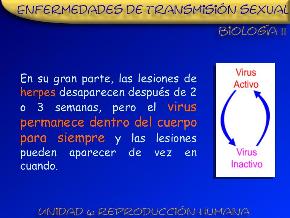 En su gran parte, las lesiones de herpes desaparecen después de 2 o 3 semanas, pero el virus permanece dentro del cuerpo para siempre y las lesiones pueden aparecer de vez en cuando.