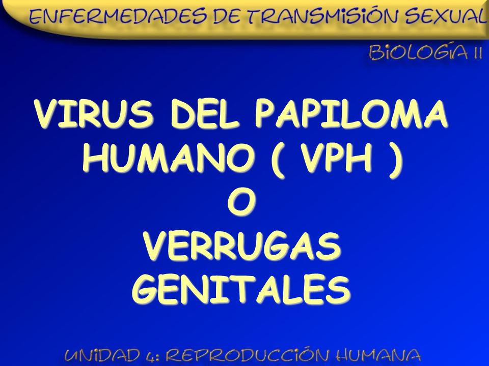 VIRUS DEL PAPILOMA HUMANO ( VPH ) O VERRUGAS GENITALES