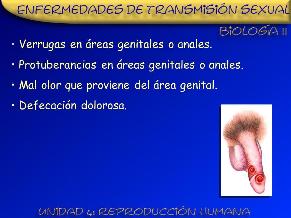 Verrugas en áreas genitales o anales.