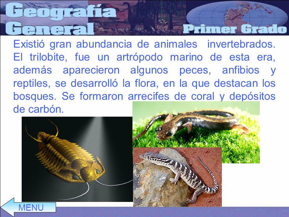 Existió gran abundancia de animales invertebrados