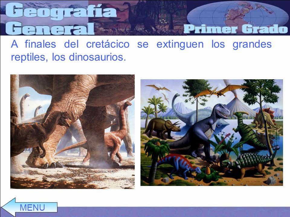 A finales del cretácico se extinguen los grandes reptiles, los dinosaurios.