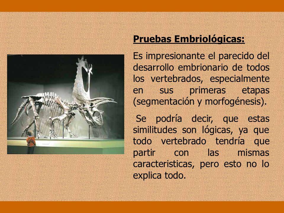 Pruebas Embriológicas: