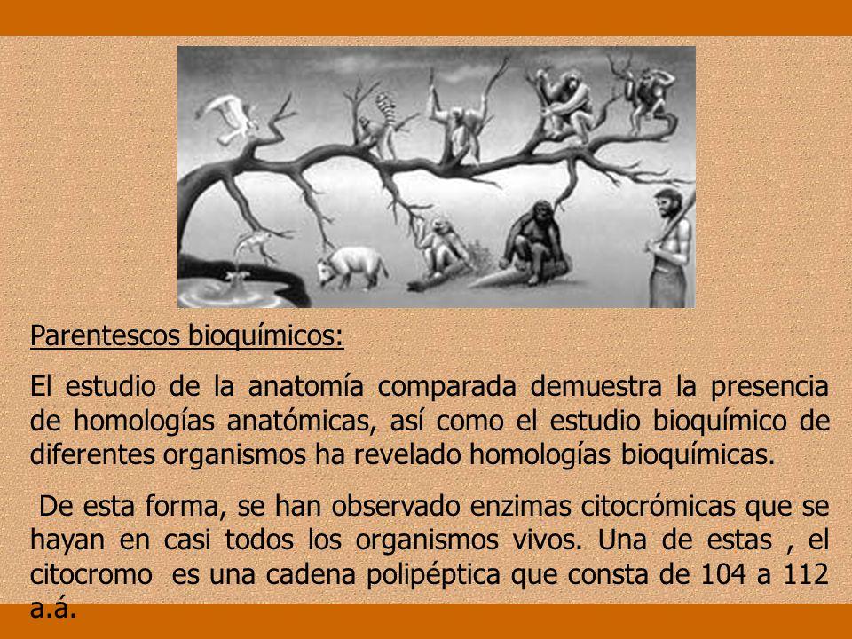 Parentescos bioquímicos: