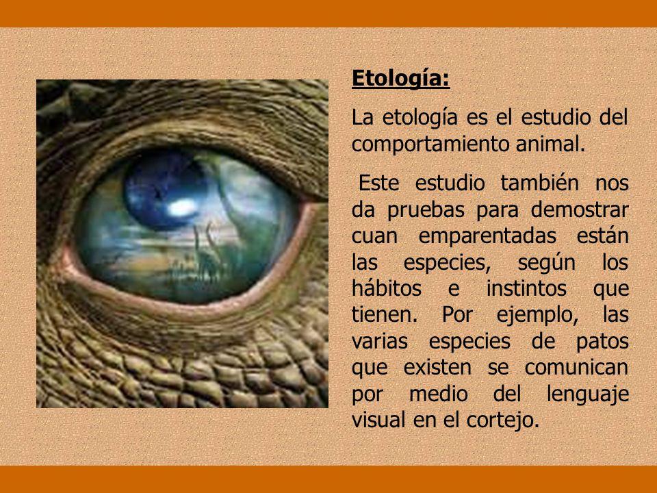Etología: La etología es el estudio del comportamiento animal.