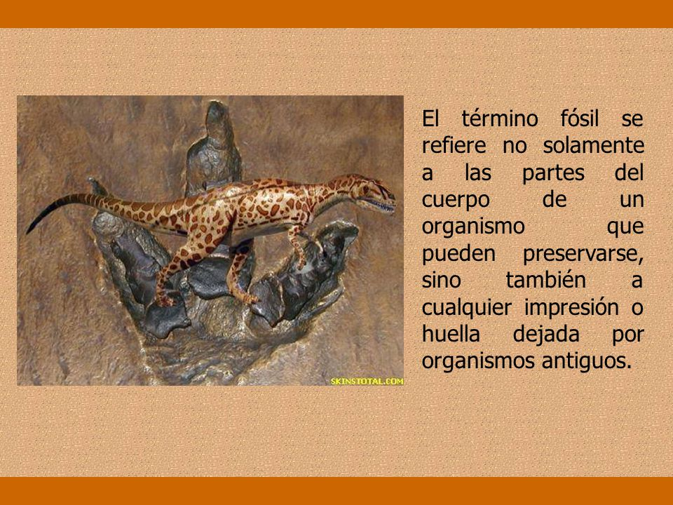 El término fósil se refiere no solamente a las partes del cuerpo de un organismo que pueden preservarse, sino también a cualquier impresión o huella dejada por organismos antiguos.