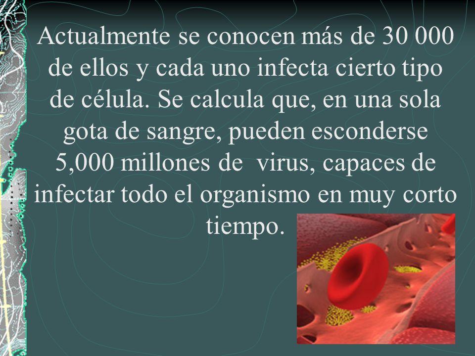 Actualmente se conocen más de 30 000 de ellos y cada uno infecta cierto tipo de célula.