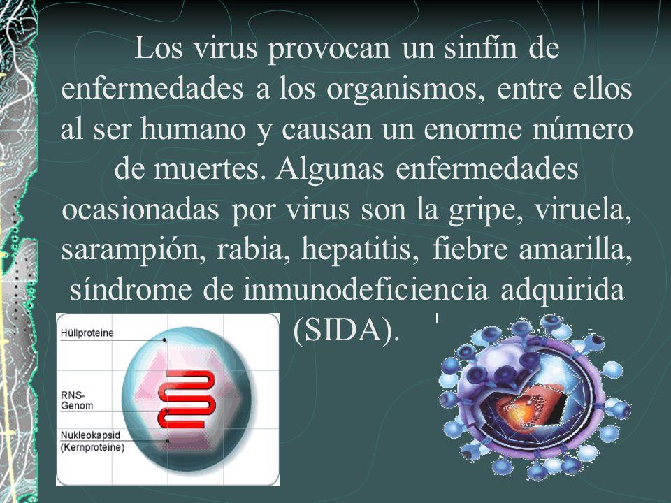 Los virus provocan un sinfín de enfermedades a los organismos, entre ellos al ser humano y causan un enorme número de muertes.
