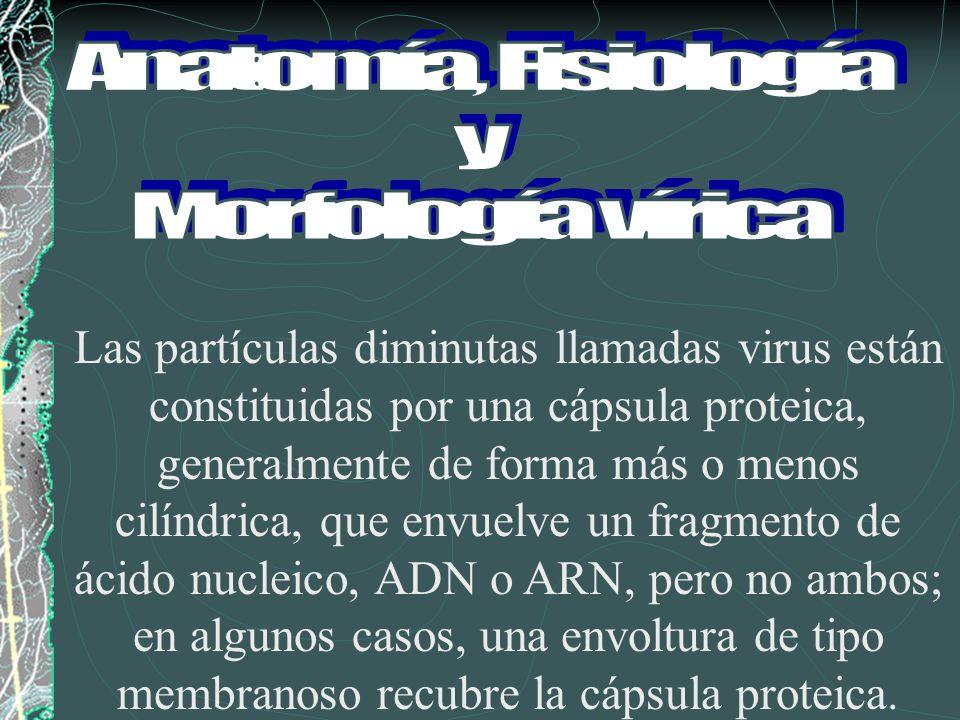 Anatomía, Fisiología y. Morfología vírica.
