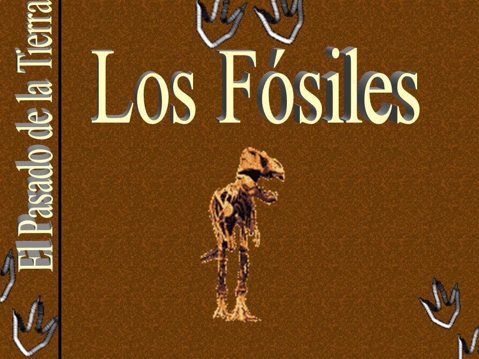 Los Fósiles El Pasado de la Tierra