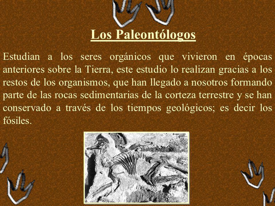 Los Paleontólogos