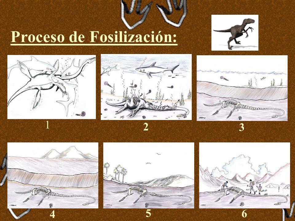 Proceso de Fosilización: