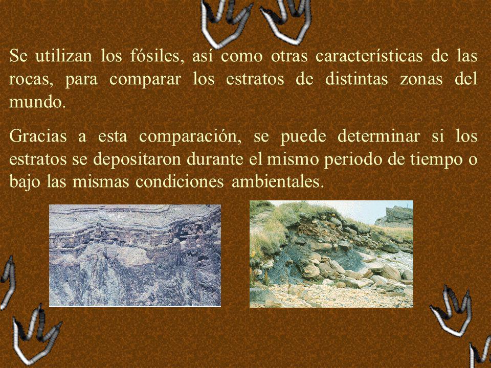 Se utilizan los fósiles, así como otras características de las rocas, para comparar los estratos de distintas zonas del mundo.