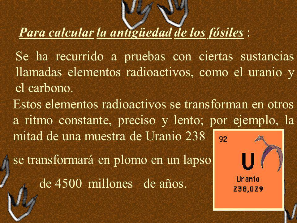 Para calcular la antigüedad de los fósiles :