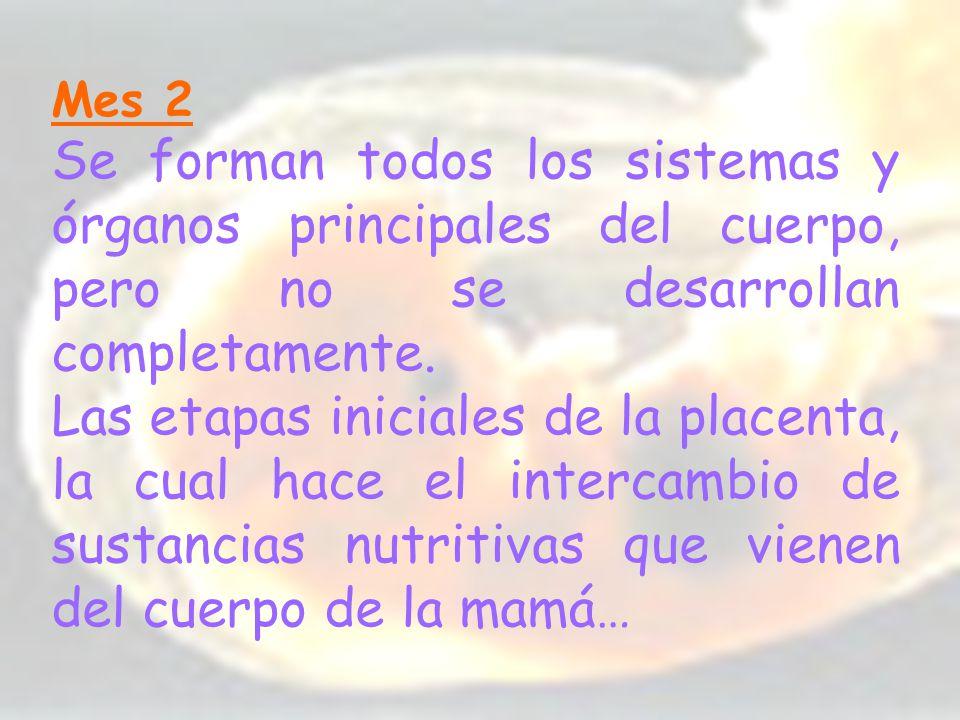 Mes 2 Se forman todos los sistemas y órganos principales del cuerpo, pero no se desarrollan completamente.