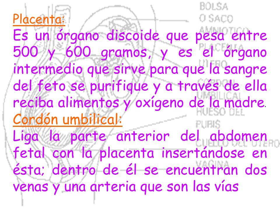 Placenta: