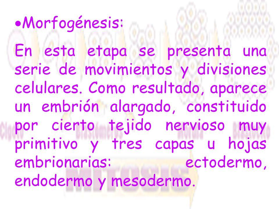 Morfogénesis: