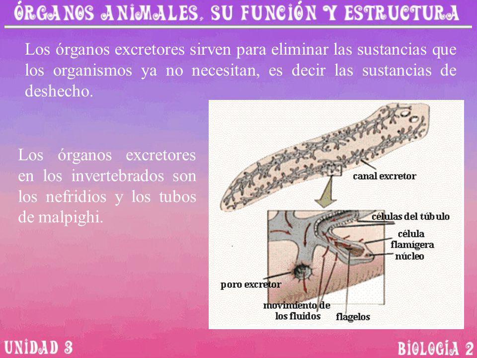 Los órganos excretores sirven para eliminar las sustancias que los organismos ya no necesitan, es decir las sustancias de deshecho.