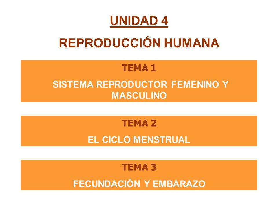 SISTEMA REPRODUCTOR FEMENINO Y MASCULINO FECUNDACIÓN Y EMBARAZO