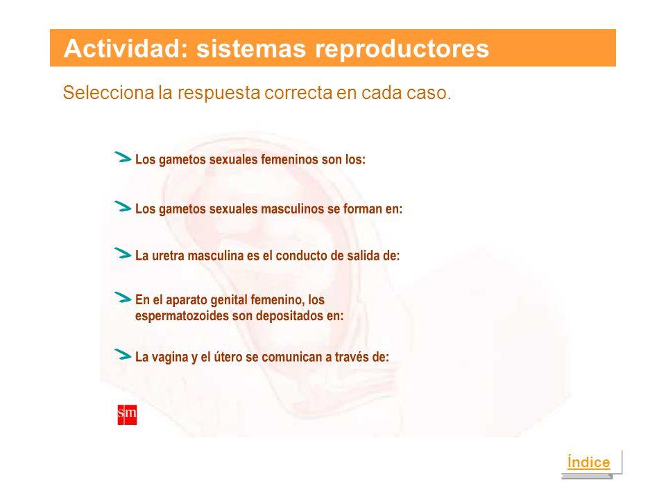 Actividad: sistemas reproductores