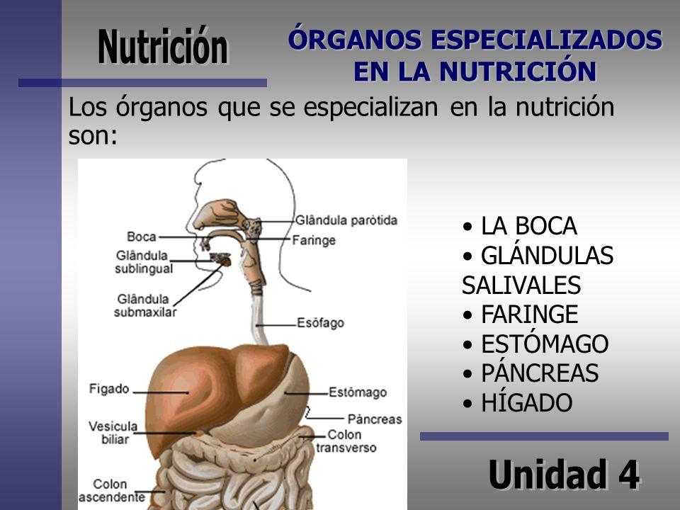ÓRGANOS ESPECIALIZADOS EN LA NUTRICIÓN