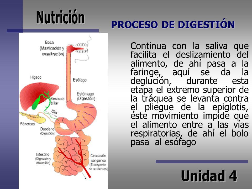 PROCESO DE DIGESTIÓN