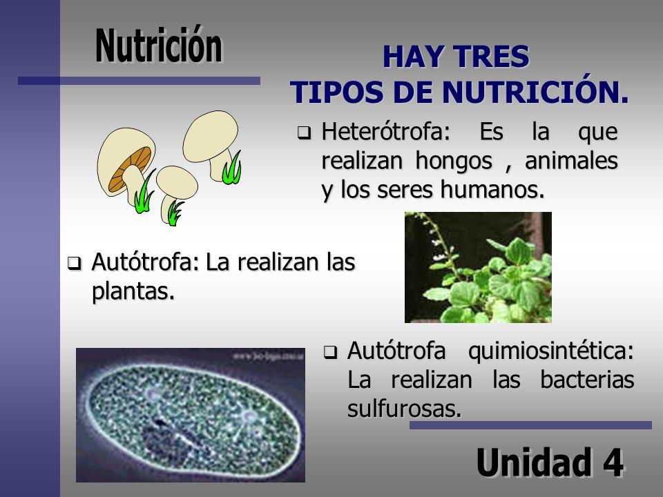 HAY TRES TIPOS DE NUTRICIÓN.
