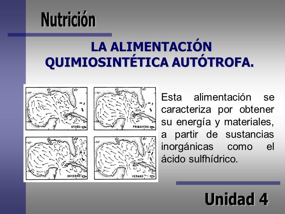 LA ALIMENTACIÓN QUIMIOSINTÉTICA AUTÓTROFA.