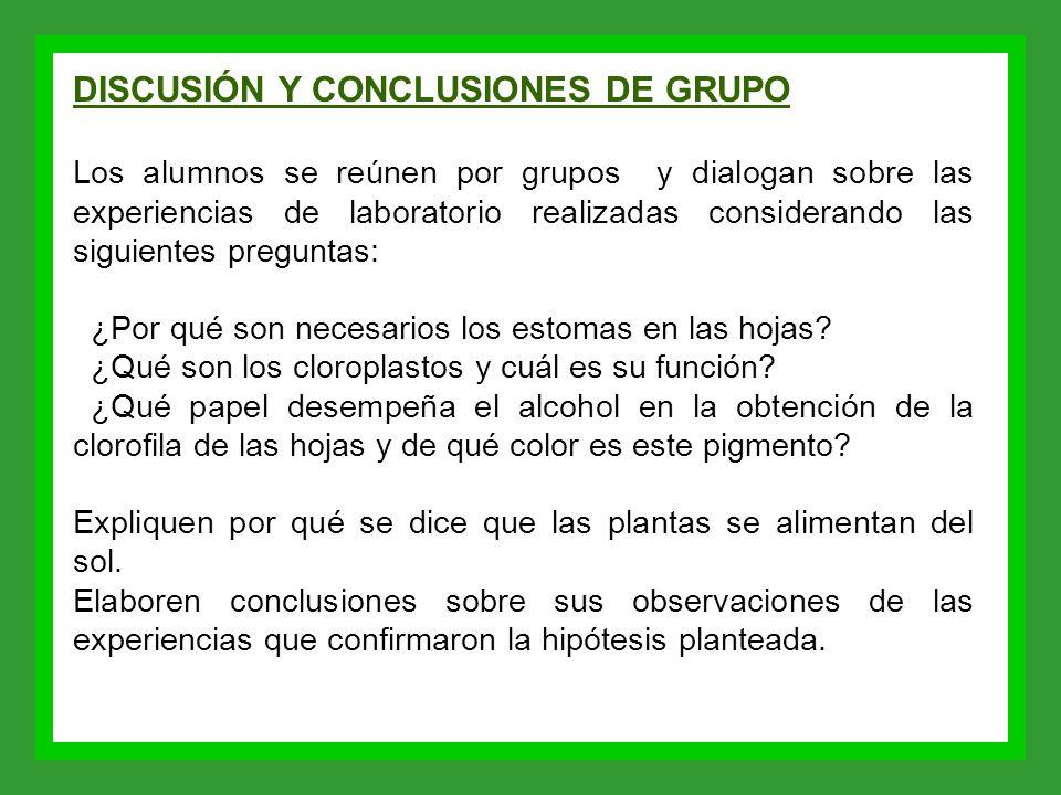 DISCUSIÓN Y CONCLUSIONES DE GRUPO