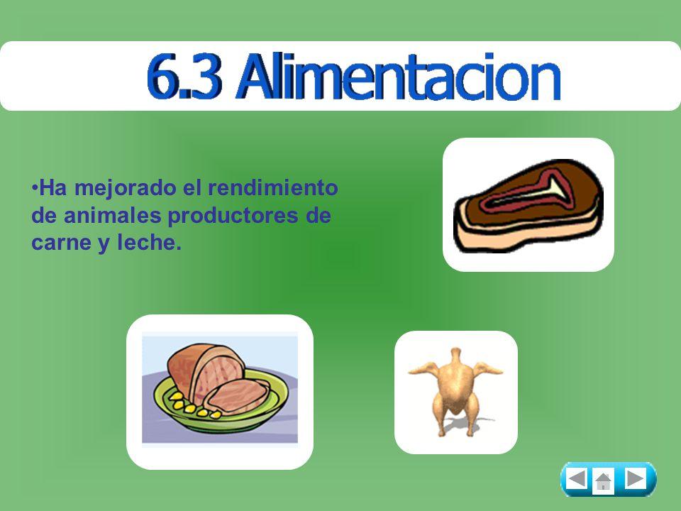 Ha mejorado el rendimiento de animales productores de carne y leche.