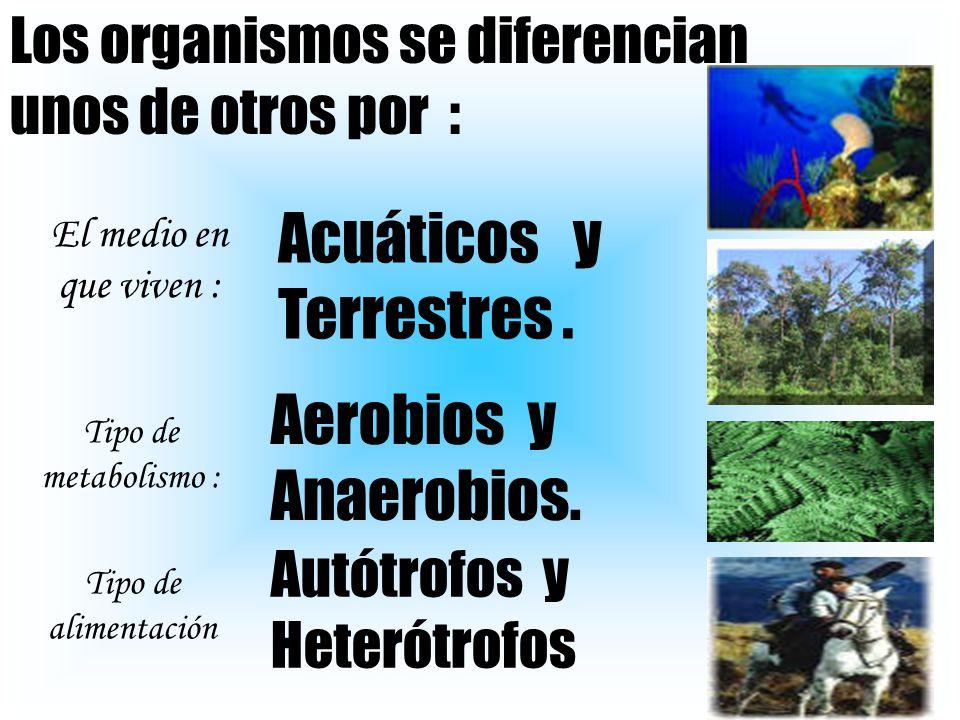 Acuáticos y Terrestres .