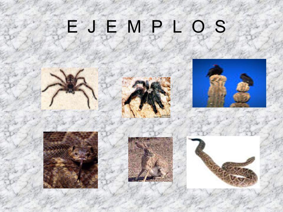 E J E M P L O S