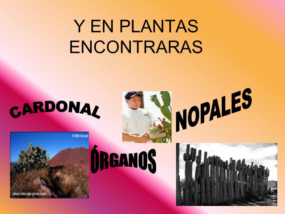 Y EN PLANTAS ENCONTRARAS