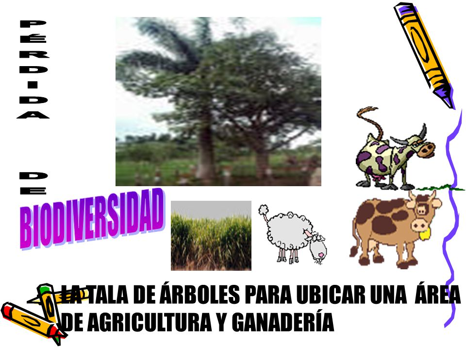 PÉRDIDA DE BIODIVERSIDAD LA TALA DE ÁRBOLES PARA UBICAR UNA ÁREA DE AGRICULTURA Y GANADERÍA