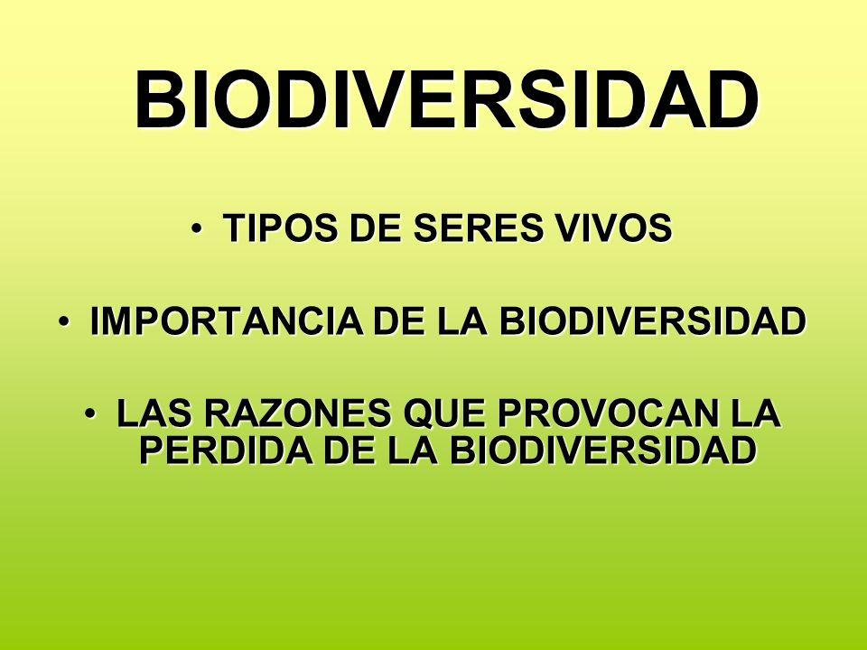 BIODIVERSIDAD TIPOS DE SERES VIVOS IMPORTANCIA DE LA BIODIVERSIDAD