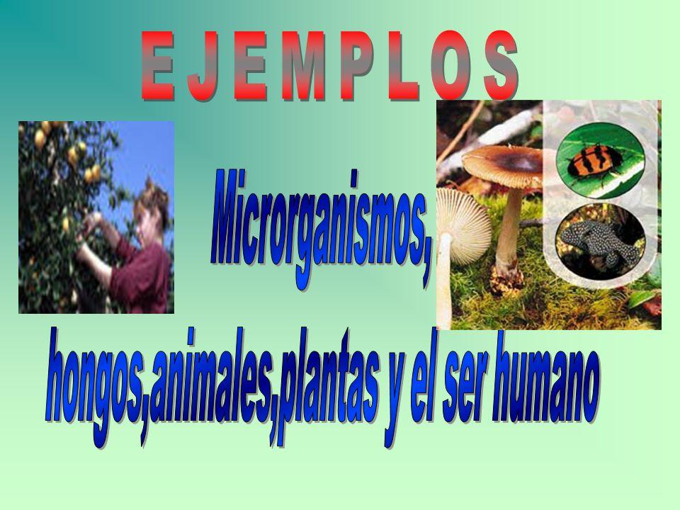 hongos,animales,plantas y el ser humano