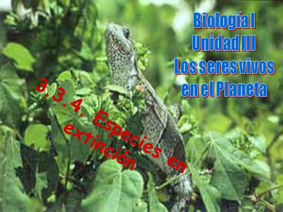 3.3.4. Especies en extinción Biología I Unidad III Los seres vivos
